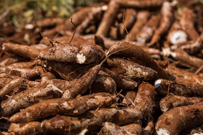 Nigeria Spends About $600 Million for Cassava Importation